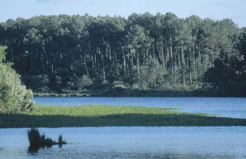 Pêche en étangs et rivières Moliets