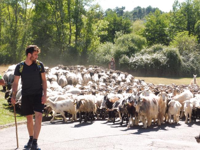 Route-de-la-Transhumance-etape-Lacquy-les-bergers