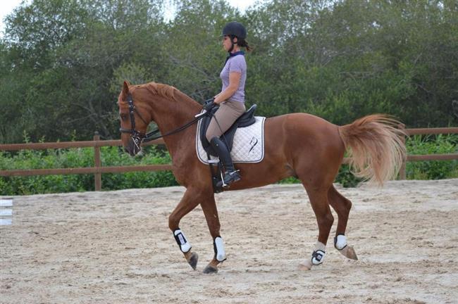 centre-equestre-laouadie-bisca